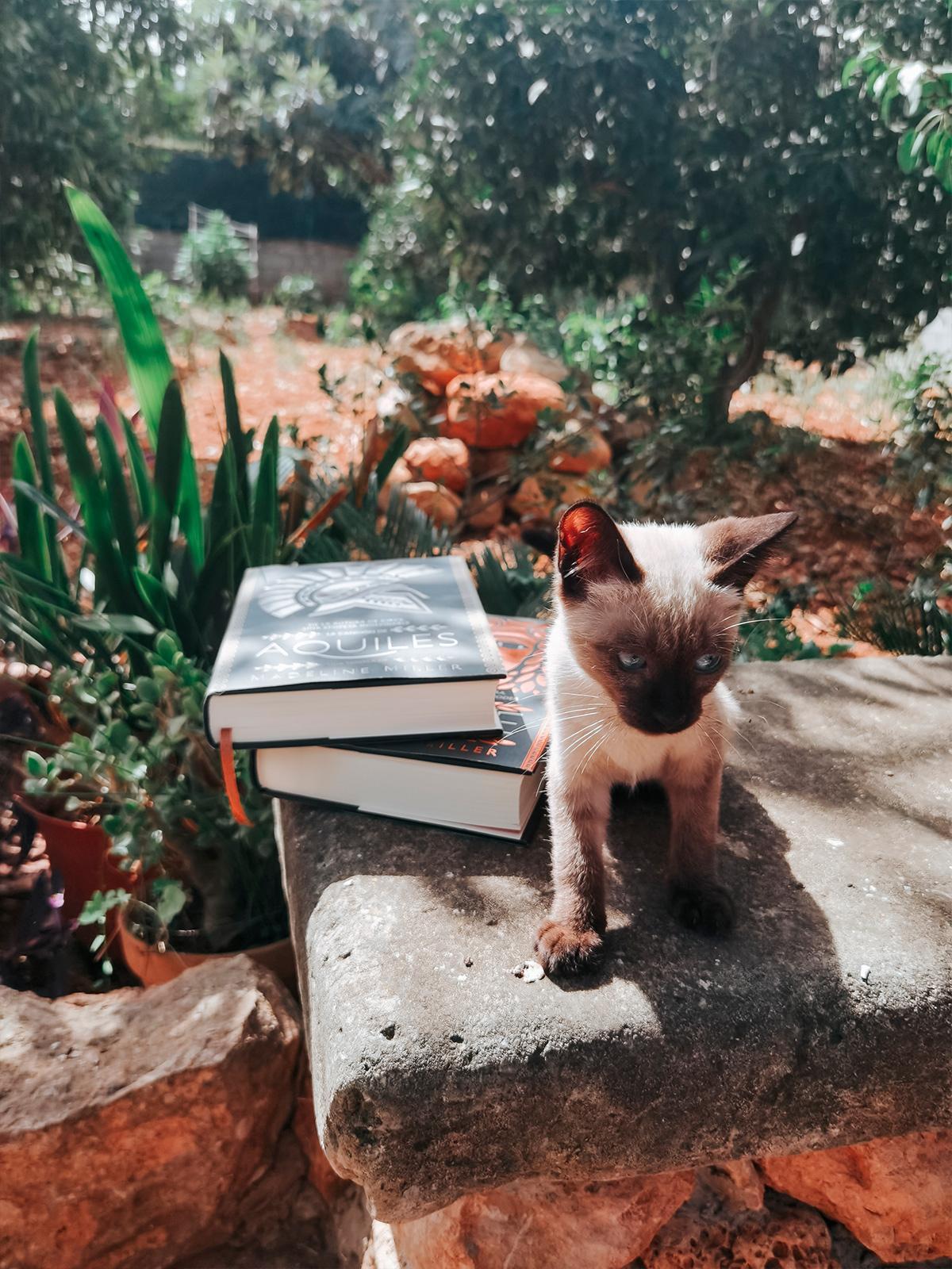 Gato sobre banco de piedra con La canción de Aquiles y Circe de Adnovelas