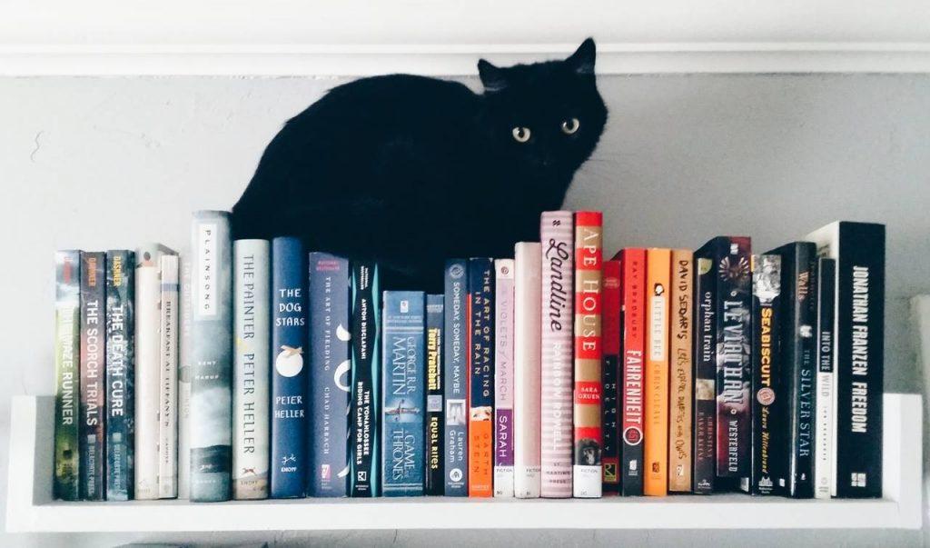Momoko blog de libros