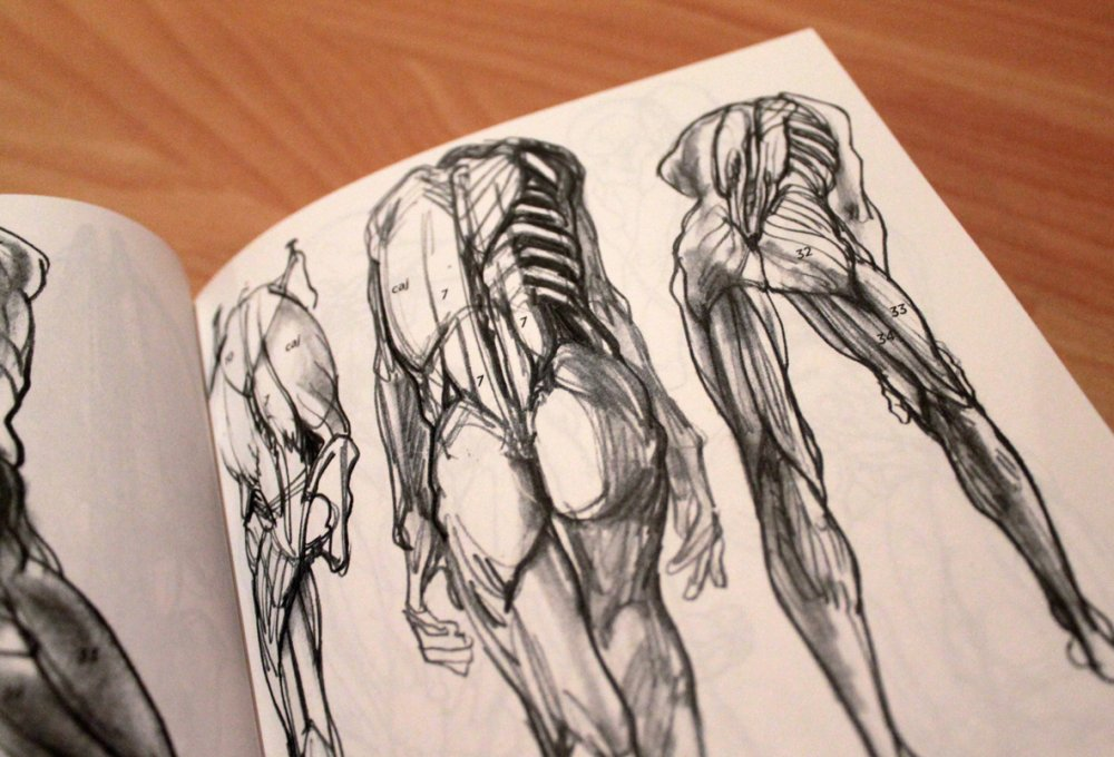 Anatomía artística de Michel Lauricella